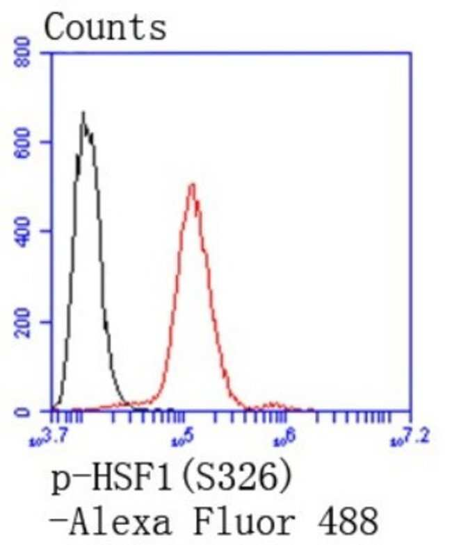 HSF1 Rabbit anti-Human, Clone: SU31-03, Novus Biologicals 100μL:Antibodies